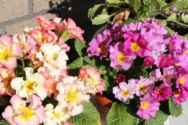 http://kanezaki.net/blog/flower03.jpg